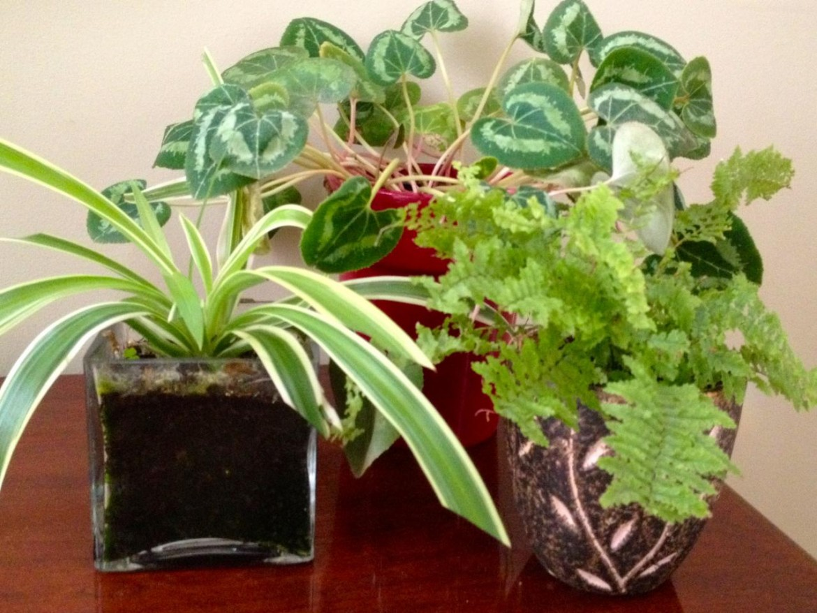 knowing-about-in-house-plants