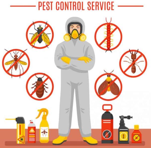 Pest control prices Burleigh Heads